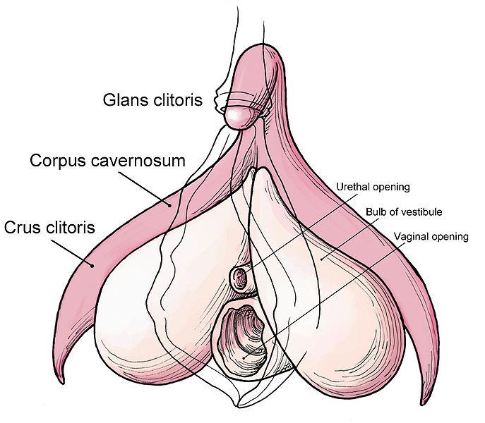 klitorisorgasm